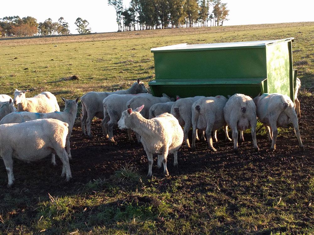 Suplemento pre parto en ovejas melliceras